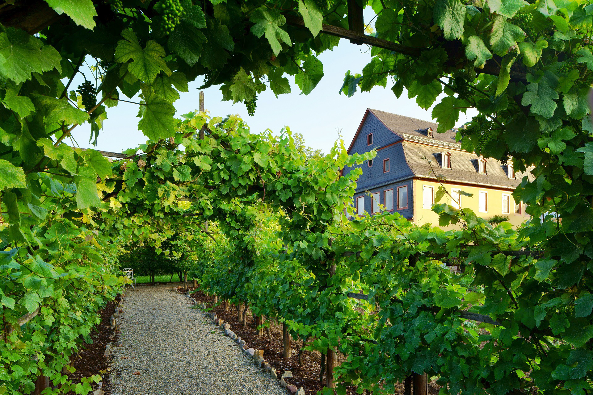 Brentano-Haus, Weinlaubengang