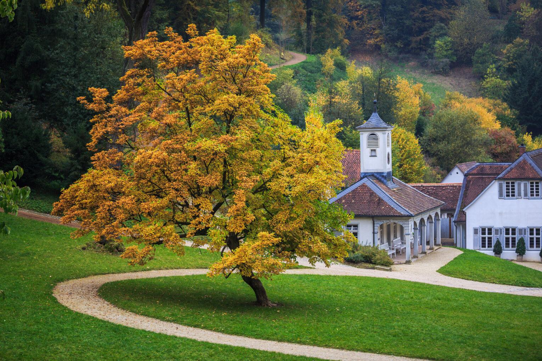 Fürstenlager, Baum mit Dorf im Hintergrund