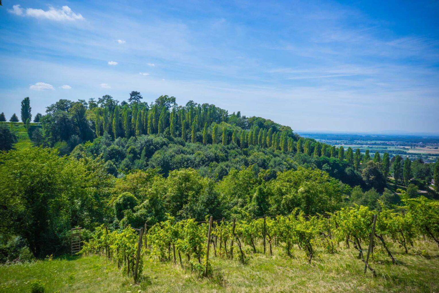 Blick ins Grüne aus Sicht des Staatsparks Fürstenlager