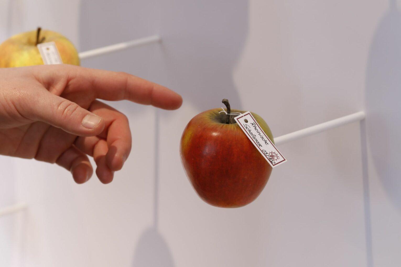 Täuschend echte Früchtemodelle: bemaltes Papiermaché